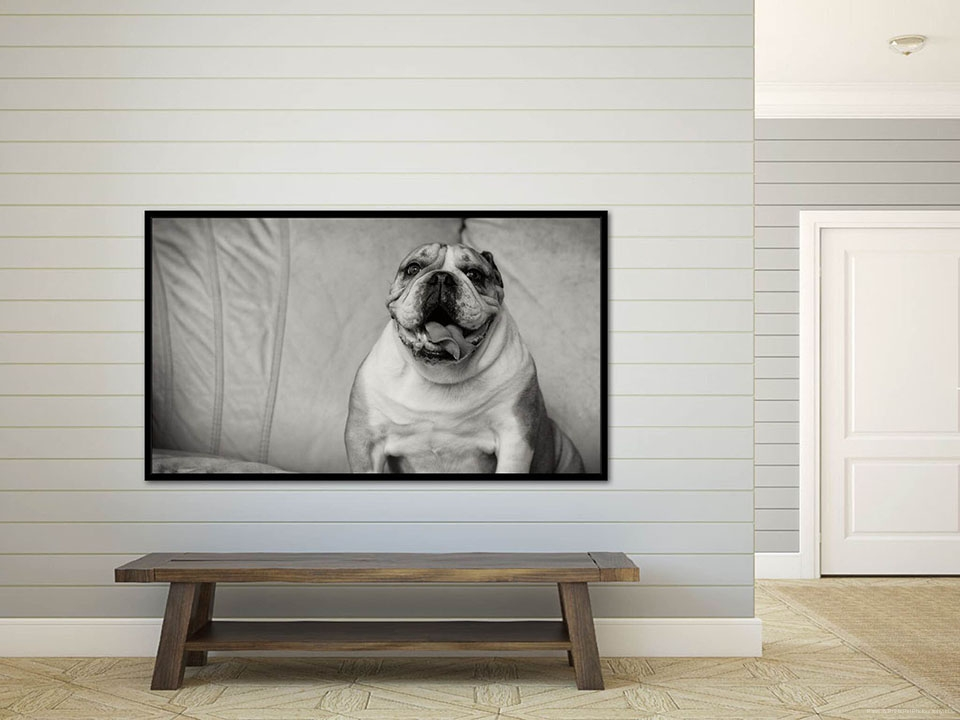 Foyer Framed Art : Custom wall art paws prints pet photography modern
